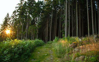 Habitual to Ritual: What is earthing?
